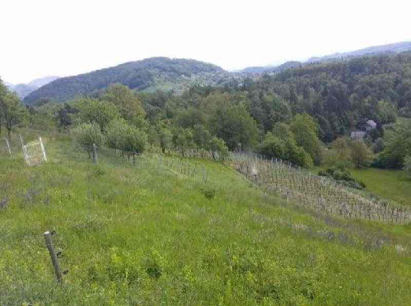 Продажа коттеджа с виноградниками около Словенских Коньиц (Словения) без комиссии!. Фото