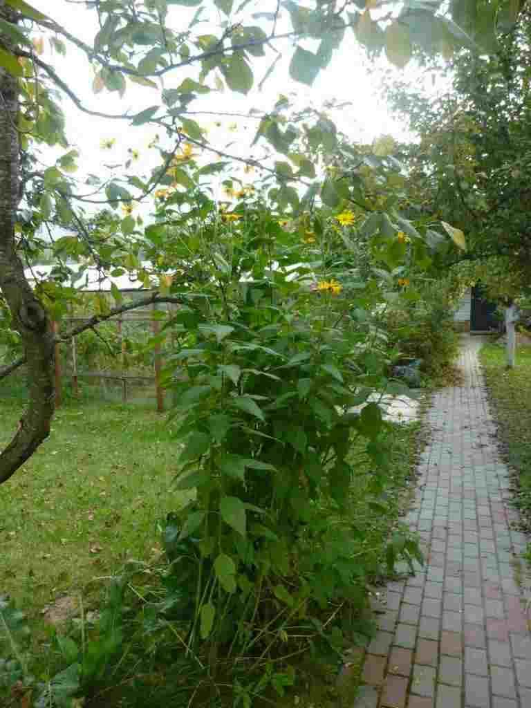 Коттедж в Фаниполе с прекрасным садом. Фото